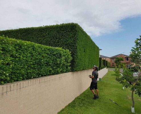 Lawn care Sydney